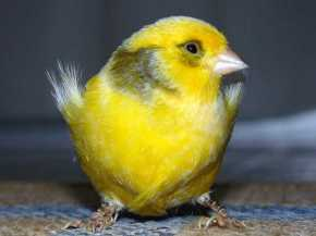 The Economic 'Canary In The Coalmine' Has Hit A High Note